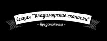 секция Владимирские спаниели - представляет: